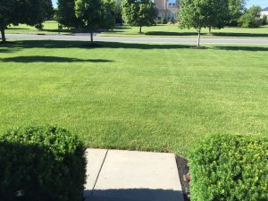 growing a green lawn and killing crabgrass